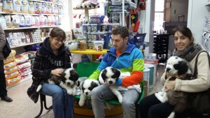 Els cadells al dispensari 2