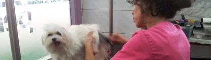 Perruqueries de gossos i de gats