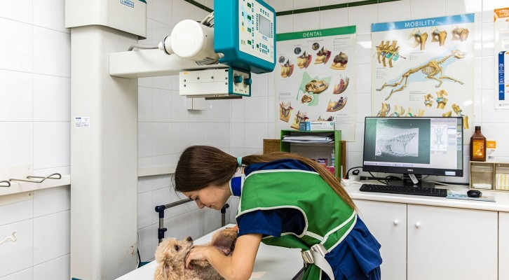 Dispensari Veterinari Montcada i Reixac - Can Cuiàs