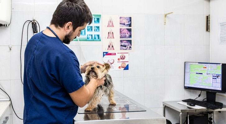 Medicina preventiva veterinària