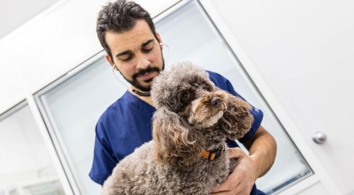 Medicina interna veterinària