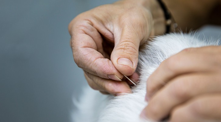 Acupuntura veterinaria