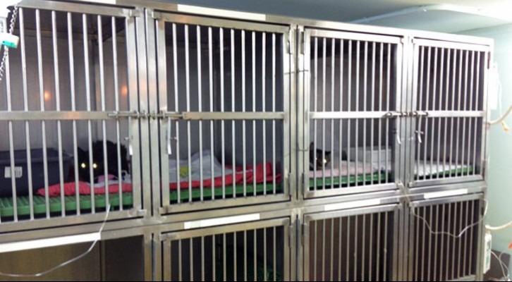 Zona d'hospitalització separada per a gats