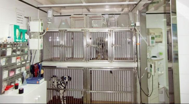 Zona d'hospitalització separada per a gossos
